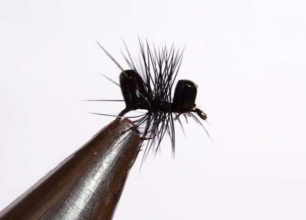 Fliegen simple fliegen with fliegen die berall auf der for Fliegen in blumenerde entfernen